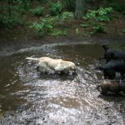 Modderpoel, speciaal voor honden