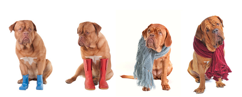 Honden in de winter