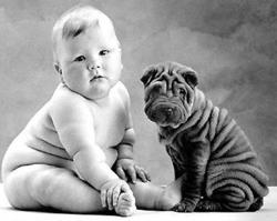 baby hond