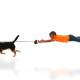 cursusaanbod - kind hond cursus