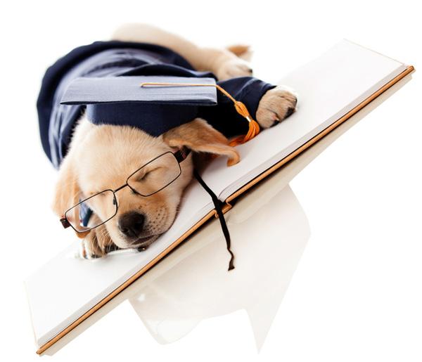 cursusaanbod - puppy opstap