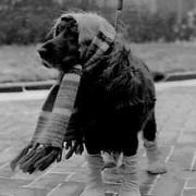 honden in de winter..