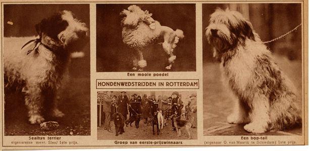 hondenshow 1924