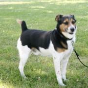Hondenkeuring ras loze honden en honden zonder stamboom
