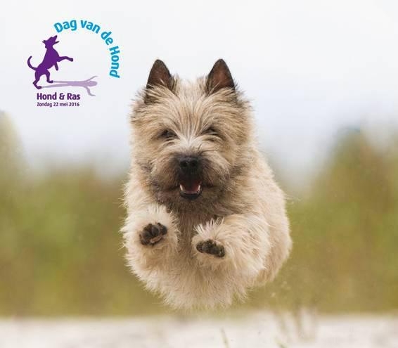 dag van de hond21-5-2016