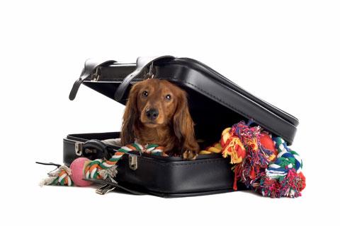 Honden en vakantie