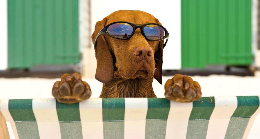 Hond-op-vakantie1