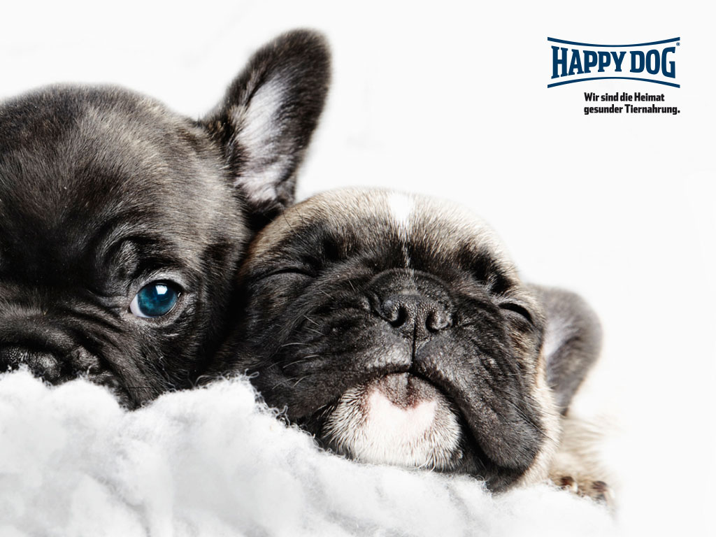 Happy Dog 10